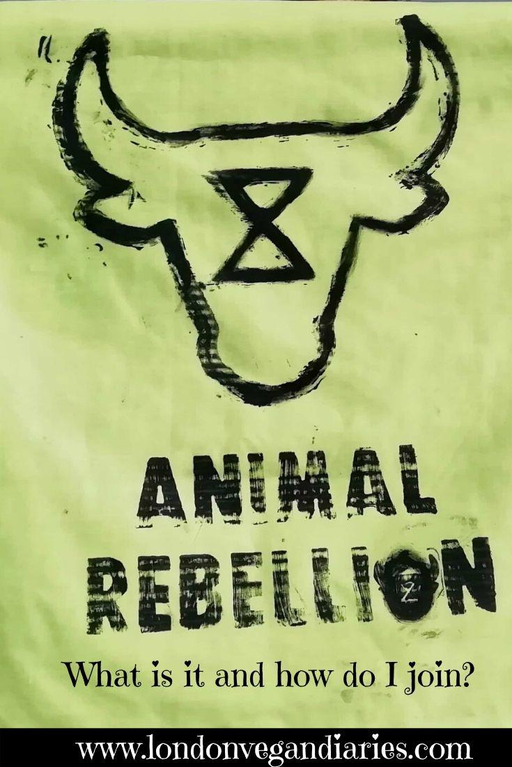 Animal Rebellion Pinterest Pin