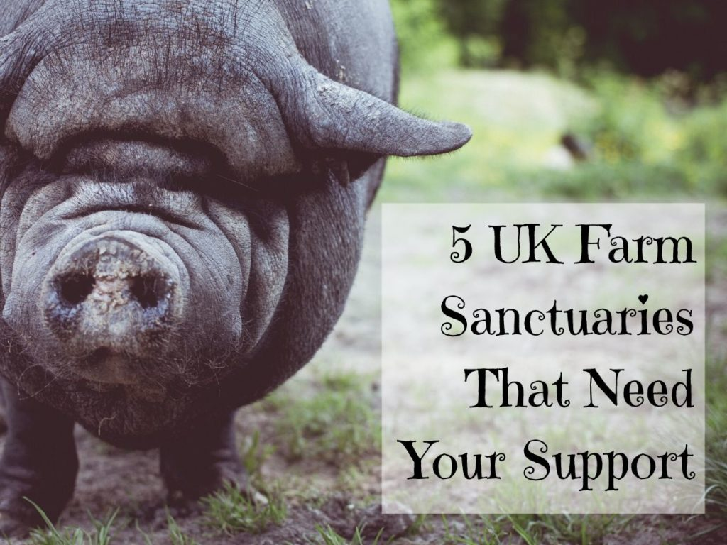 5 UK Farm Sanctuaries That Need Your Support