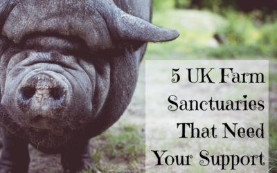 Five UK Farm Sanctuaries That Need Your Support