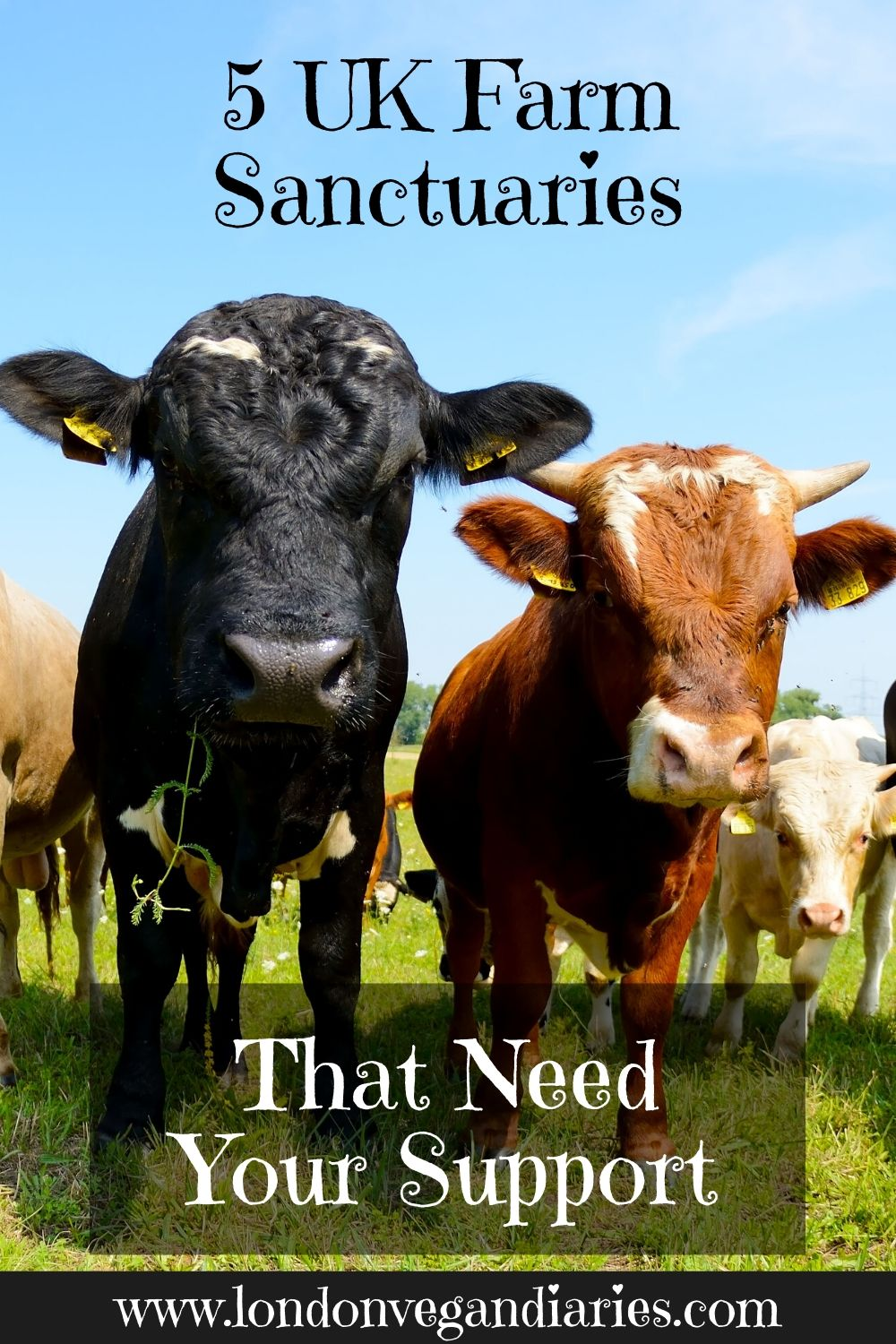 5 uk farm sanctuaries that need your support Pinterest Pin